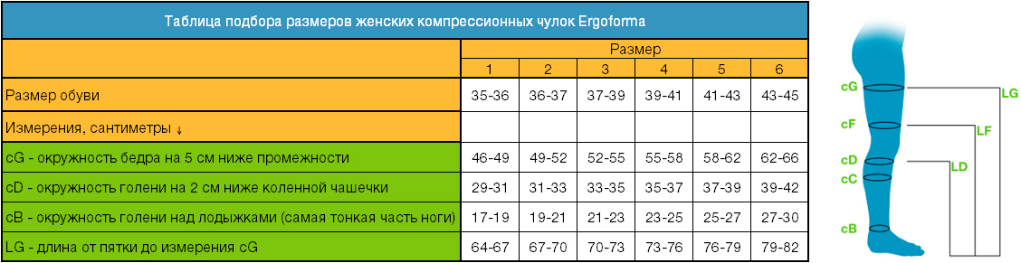 Определение размера чулок Ergoforma