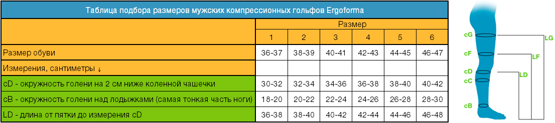 Определение размера мужских компрессионных гольфов Ergoforma